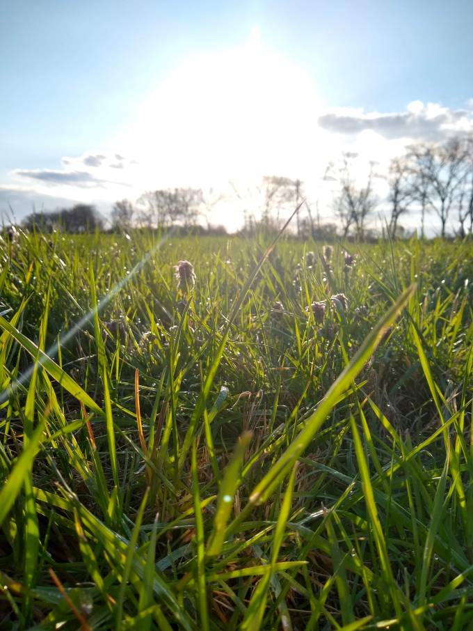 green grass with bright sun and blue sky