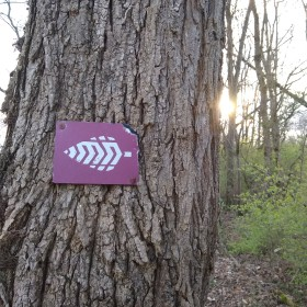 Urban Wilderness sign on tree with sunrise